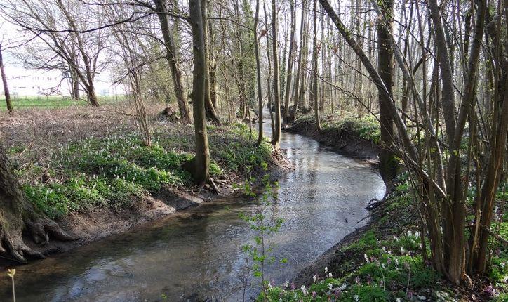 Lieu dit de la Saussaie : cours d'eau après restauration